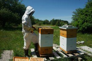 Apiculteur devant une ruche